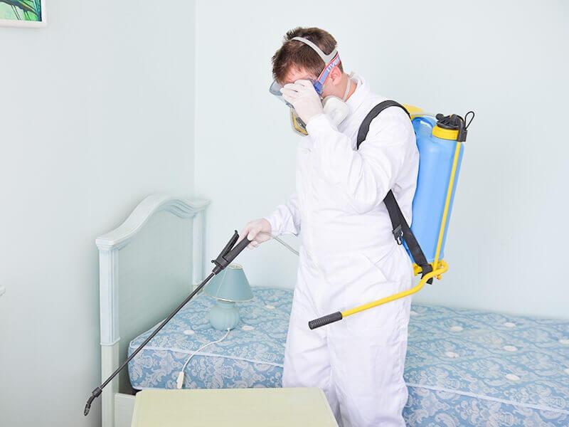 شركة مكافحة حشرات بالدمام 0590002907، 0564171964 شركة نوافذ الشرقية لإبادة الحشرات والقوارض